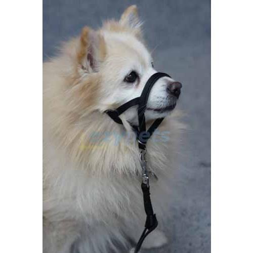 Halti Head Collar For Dogs Vebo Pet Supplies Australia
